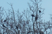 Seeing unidentifiable birds is the like hearing gibberish (Copyright Hearing Wellbeing 2012)
