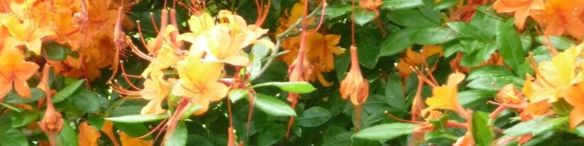 Orange (CCL Hearing Wellbeing 2012)